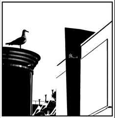 Bird Watch in the City (ronramstew) Tags: bird seagull buildings liverpool merseyside bw blackandwhite lordstreet highcontrast bhs