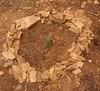 Medronheiro (aulasdeviolino) Tags: arbutusunedo medronheiro strawberrytree