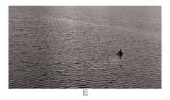 Fishermen (krishartsphotography) Tags: krishnansrinivasan krishnan srinviasan krish arts photography monochrome fineart fine art fishermen net river kauveri kaveri cauvery cauveri dam kallanai trichy tamilnadu india