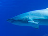OCEANOGRÀFIC 23 (Sachada2010) Tags: sachada sachada2010 javier martin olympus epl6 valencia micro 43 panasonic 14mm zuiko 8mm 45mm f18 40150mm r oceanografic fondo marino bull shark tiburon toro 9mm fisheye