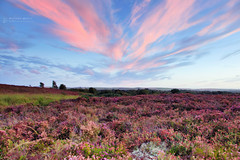 Summer Evening on Tadnoll Heath (RichardBeech) Tags: heathland heath heather summer colour colourful nature wildflowers rural outdoors countryside uk dorset tadnoll winfrith sunset evening sky clouds moon night canon canon5dmarkiii canon24105mm ndfilter august 2017