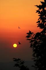 Morning arabesque (Alessio Vincenzo Liquori) Tags: sunrise sun arabesque birds silhouette color colors tree alba arabesco albero sole rosso red