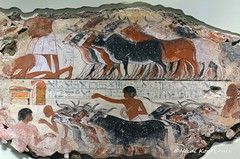 Herd of Cattle (konde) Tags: nebamun 18thdynasty thebes newkingdom tombrelief tombpainting ancientegypt britishmuseum art cattle treasure