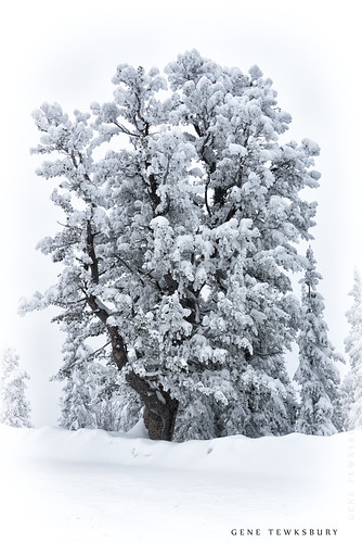 Tree in snow.