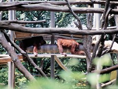 1994_Singapore_2016-07-18_Photo_240 (Matthias & Paula) Tags: singapore sentosa kuala lumpur malaysia cameron highlands zoo japanese gardens