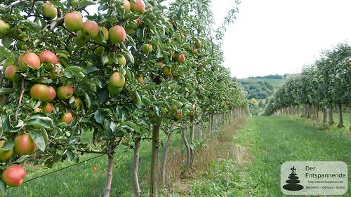 In den Obstfeldern vor Zornheim