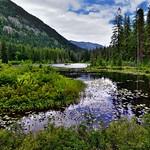 Greens of Leaves and Water Reflections off Howard Lake (Lake Chelan National Recreation Area) thumbnail