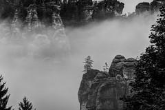 Nebel an der Bastei, b&w