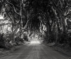 One from last September I took on a two day trip around Ballintoy and surrounding areas. (Darren Kearns) Tags: darkhedges dark hedges got blackwhite blackandwhite landscape northernireland tourism vacation canon old ancient famous leaves trunks treee beautiful