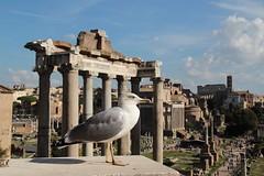 Monuments... (modestino68) Tags: roma rome arte art storia history gabbiano seagull monumenti monuments yanntiersen