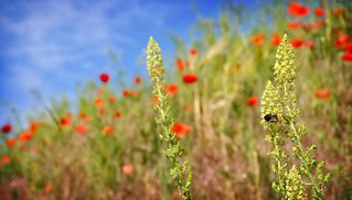 Talus fleuri et bourdon occupé :)