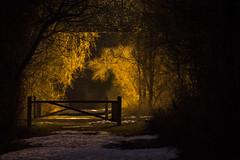 Lost Byway (• estatik •) Tags: lambertville nj new jersey hunterdon county usa night long exposure winter tow path old rr railroad right way fence trees light dark alone
