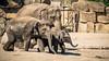 Tierpark Berlin (Zarner01) Tags: tiere tiger elefanten tierpark berlin tierparkberlin zoo deutschland germany 55250 is stm tier canon canoneos750d