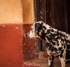 Cuba - Trinidad (Cyrielle Beaubois) Tags: 2016 cuba cyriellebeaubois décembre carribeans caraïbes trinidad house archipiélagodeloscolorados architecture streetphotography streets dog dalmatien dalmatian
