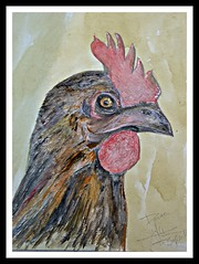 Donna (patrick.verstappen) Tags: donna chicken watercolor inkt schut paper acryl art pencil painting lovely flickr facebook gingelom google ipernity ipiccy image photo picassa pinterest pat september autumn sigma nikon d7100 nutwater