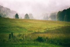 Blue Ridge Daybreak (shutterclick3x) Tags: landscape countryside backroads fog trees fence frankloose
