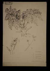 コスタリカ 画像30