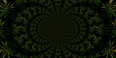 cannabinoidal (allan_e) Tags: cannabis marijuana oregon homegrown flower freetheherb kaleidoscope garden