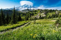 Wild Rainier (jeff's pixels) Tags: mountrainiernationalpark mountrainier wildflowers outdoors hiking skyline trail nature clouds sky landscape mountain field tree lenticular