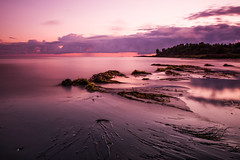 Calm before the storm (aramfranke) Tags: sunrise clouds stormy sea seaweed long exposure longexposure sand trees tree sky light sunlight nature reflection pink nikond5500 nikon water landscape sigma 17mm outdoor beach