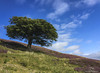 Tree on the hill. (CamraMan.) Tags: tree hill heather scotland wanlockhead leadhills ©davidliddle ©camraman iphone lanarkshire