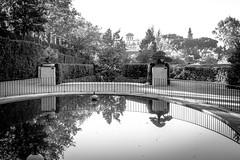 Terraza de los bonsáis, Real Jardín Botánico, Madrid, Spain (marysaesteban) Tags: 2016 españa madrid realjardínbotánico spain fall royalbotanicgarden bn bw blancoynegro blackandwhite canong1xmarkii