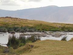 DSC00437 (francy_lioness) Tags: safari jeep animals animali ippopotami leone savana gnu elefante iena pumba tanzaniasafari ngorongorocratere gazzella antilope leonessa lioness facocero