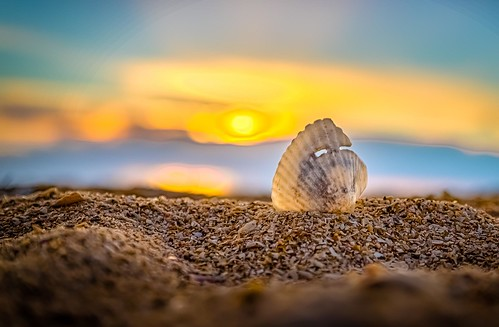 Sunset Shell 2