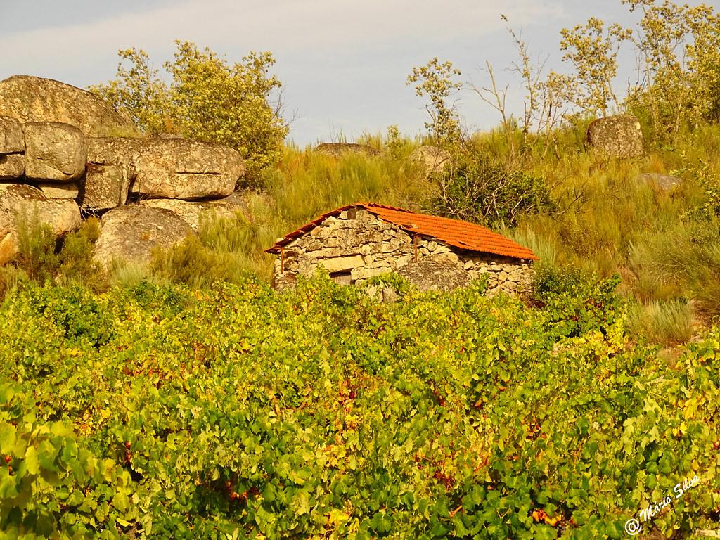 Águas Frias (Chaves) - ... abrigo entre a vinha, as giestas e as fragas ...