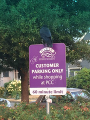 2017 YIP  Day 247: Crow Parking Only