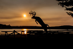254/365: Stag