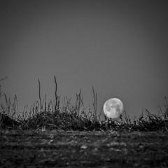 Lluna .. Moon (Miquel Lleixà Mora [NotPRO]) Tags: gfh grupfotohavana miquellleixà matinal blancoynegro blackandwhite blancinegre nit night lluna moon terra igerscatalunya igersmaresme igersmataro
