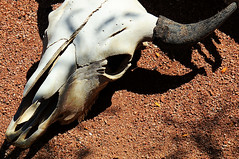 A Dry Heat (studioferullo) Tags: art beauty bright colorful colourful colors colours contrast dark detail downtown edge light minimalism natural old outdoor outside perspective scene serene tranquil shadow study sunlight sunshine texture tone weathered world sedona arizona skull bone horn cattle animal diagonal heat