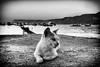 Maritime Cat (Stefano Avolio) Tags: cat gatto marittimo maritime porto scilla calabria biancoenero bianconero blackwhite blackandwhite bw stefanoavolio riposo animale animal rest monocromo