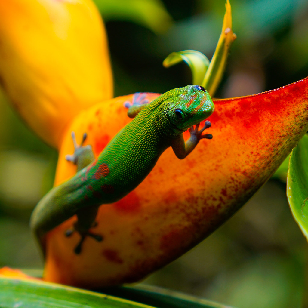 the world u0027s most recently posted photos of gecko and lizard