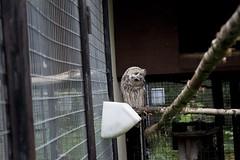 A New Friend (alexwinger) Tags: park russia animals cloud day d5200 nikon bird brown green owl