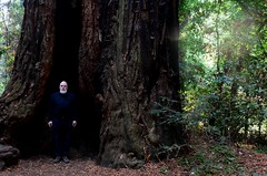 Sequoia (Studio d'Xavier) Tags: werehere treespirits sequoia nonposeposing californiaredwood tree 365 september242017 267365
