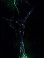 . (Lauri S Laurén) Tags: spiderweb art artphoto photoart contemporaryart contemporary laurilaurén night nightphoto nature naturephoto yö hämähäkinverkko finland swamp marsh mire summer suomi taiga insect web dark dusk tuusula