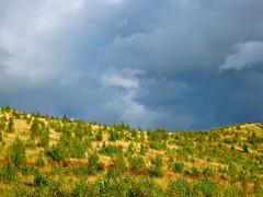 Paprika (mattisunell) Tags: hiilikasa vuosaari itähelsinki