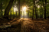 Woodland light (SimonLea2012) Tags: d7000 nikon uk gold red colour sundown sunset dusk leaves season autumn journey path beams rays light trees woodland infocus