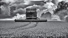 Race against time (David Feuerhelm) Tags: monochrome blackandwhite bw schwarzundweiss noiretblanc contrast countryside harvest machine harvester wheat clouds field crop dust suffolk nikon silverefex d750