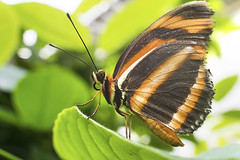 Beautiful Butterfly (Jeff Camphens) Tags: butterfly insect green orange bright sun day animal wild nature bizzarebugs