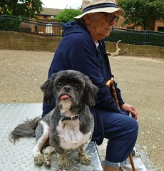 Friend Ruth, 85 and Stanley, 7 (helenoftheways) Tags: dogs friends stanley shihtzu london uk sit sitting seated littledoglaughedstories