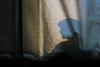 """Moerdijkbrug - """"Vernieuwing ERS-spoorsysteem (Embedded Rail System) 6 augustus 2017"""" Moerdijk.63 by Hans Hendriksen (Travel Photography - Reisfotografie) Tags: prorail randstad zuid dordrecht moerdijk lage zwaluwe moerdijkbrug spoorbrug brug strukton rail sweco sanering sloop opbreken spoor sporen spoorbaan spoorwegen ns 1951 vakwerkbrug geklonken compensatielas compensatie inrichting edilon sedra qumey laspockets brugdeel brugdek rijkswaterstaat gieten ers embedded system tweecomponenten hollands diep waterstralen goot 2500 bar spoorwerk spoorwerker lwb robotwagen robot tent tenten conservering"""