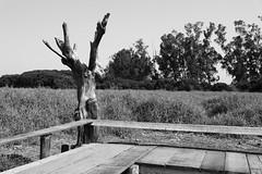 Dead Tree (superzookeeper) Tags: 5dmk4 5dmkiv hk hongkong canoneos5dmarkiv ef2470mmf28liiusm namsangwai tree grass monochrome blackandwhite eos yuenlong bnw digital favorites village landscape