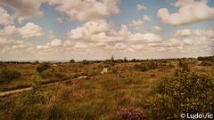 Après-midi d'été à Malchamps (BE) (Lцdо\/іс) Tags: lцdоіс belgique belgium fagnes nature ardennen ardennes ardenne liège wallonie province treking