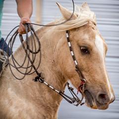 Beleza animal (Ars Clicandi) Tags: brazil brasil parana jaboti prova do laço comprido peao peão boiadero boiadeiro cowboy paraná br beleza animal beauty cavalo egua horse