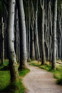 Gespensterwald - Ghostforest