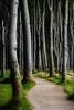 Gespensterwald - Ghostforest (Rainer Schund) Tags: gespensterwald ghostforest forgotten forest wald ostsee magic magisch abandoned allemagne germany nikon natur nature natureexploring nikond4 naturemasterclass natürlich weg way tree