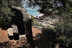 IMG_8814 (olivieri_paolo) Tags: supershots nature sea trees wild mediterraneo
